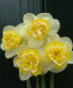 Narcissus Wave