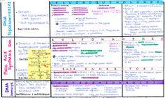 ANTIBIOTICS: COMPLETE CHART [Download: AB1, AB2, AB3] [Antibiotic Cheat Sheet]