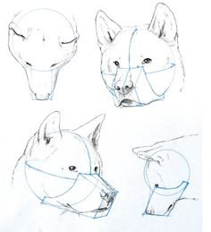 shapes of dog heads - Google Search