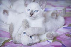 Playful cats... - Pixdaus