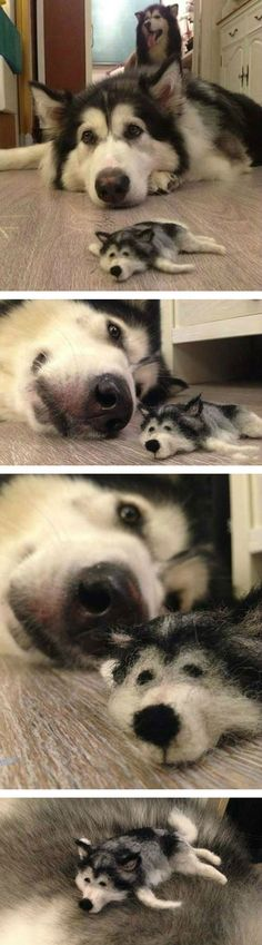 "Husky and husky ""puppy"" (aka dog fur!!). So weird"