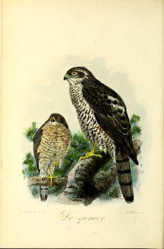 3 - Onze vogels in huis en tuin / - Biodiversity Heritage Library