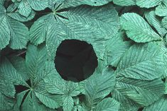 Scottish sculptor Andy Goldsworthy creates works of art by arranging leaves, sticks, rocks or anything else he can find. Art Et Nature, Nature Artists, Nature Images, Land Art, Andy Goldsworthy Art, Art Environnemental, Art Magique, Ephemeral Art, In Natura