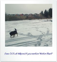 """Insta-sale at Millpond Records & Books! Save 30% until 8pm today when you mention """"Winter Blast""""!"""