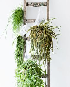 a plant ladder. Air Plants, Potted Plants, Indoor Plants, Indoor Garden, Outdoor Gardens, Plant Ladder, Decoration Plante, Cacti And Succulents, Hanging Succulents