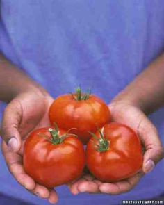 Tomatoes - Tomatoes should be started indoors 6 weeks before the last frost and only transplanted into the garden when the soil has warmed and frost no longer threatens.