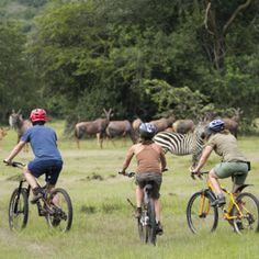 Continental safari provide affordable price trip for Uganda safaris.We can plan your trip in your budget. To know more about trip plan please contact us.