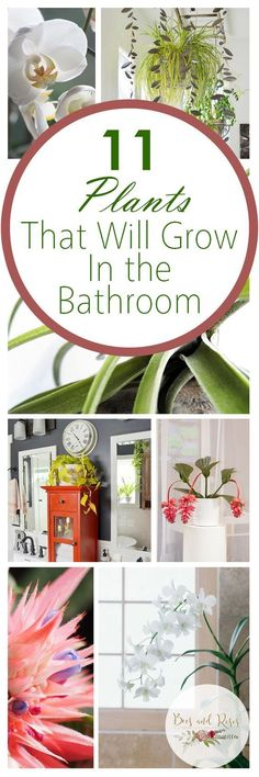 11 Plants That Will Grow In The Bathroom #Containerplants