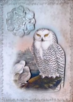 Vintage Birds 5 Snowy Owl by Gill Dean