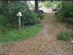Woodland Garden Ideas Dg Path   Google Search