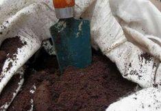 5 formas de utilizar el café usado en el jardín – Usos y Precauciones