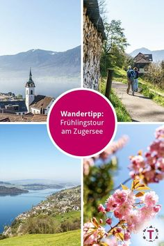 Einfache Wanderung entlang dem Zugersee - Zentralschweiz Road Trip With Kids, Seen, Switzerland, Desktop Screenshot, Wanderlust, Hiking, Places, Wonderland, Europe