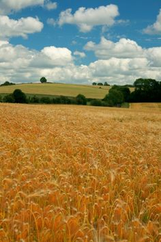 Summer in Snowshill...golden grains and cotton wool clouds. A picture of: Snowshill, Gloucestershire