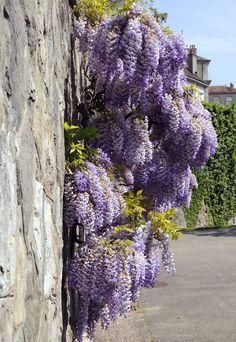 Een tuin met schuttingen of muren rondom biedt extra plantruimte.