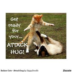 Badass Cats - Attack hug Postcard