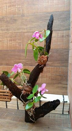 Orquídeas sem segredos; Cultivo de orquídeas; Dicas orquídeas; Orquídeas