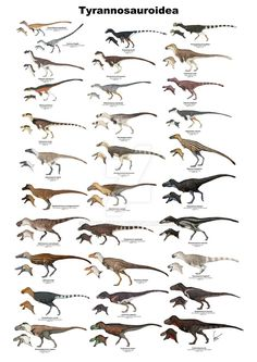 Plate with all Tyrannosauroid dinosaurs with enough fossil remains to be more or less confidently reconstructed. I am making this print available to be purchased. Here you can see Tyrannosauroids f...