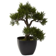 Shop Wayfair for Nearly Natural Nearly Natural Cedar Bonsai Tree in Planter - Great Deals on all Decor products with the best selection to choose from!