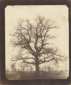 """William Henry Fox Talbot, """"An Oak Tree in Winter,"""" probably 1842-43"""