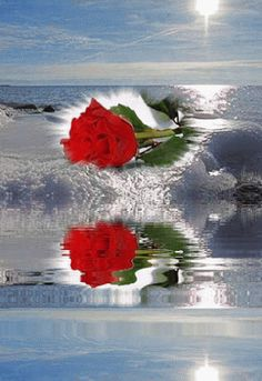 Ocean wave wetting rose long the way under a bright sunshine to stay. Beautiful Gif, Beautiful Roses, Beautiful Pictures, Beau Gif, Glitter Gif, Flowers Gif, Water Reflections, Rose Wallpaper, Gif Pictures