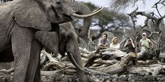 "Elephants, Wildlife Watching at the Chyulu Hills Lodge Kenya ""ol Donyo Lodge"" by &Beyond. http://www.lecoresorts.com/st_hotel/chyulu-hills-lodge-kenya-ol-donyo-lodge/"