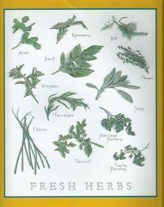 cook's illustrated back covers Botanical Illustration, Botanical Prints, Recipe Drawing, Greeting Card Box, Flora Design, Edible Garden, Food Illustrations, Fresh Herbs, Food Art