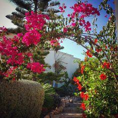 Flowers at Costa Blanca, SPain. Photo courtesy of whereissann  on Instagram.