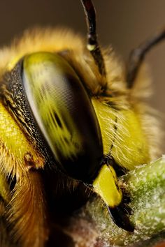Wow a cool close up of a wasps face!