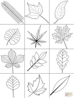 21 Awesome Image of Fall Leaves Coloring Pages . Fall Leaves Coloring Pages Reward Fall Leaves Coloring Sheets Autumn Page Free Printable Pages Fall Leaves Coloring Pages, Leaf Coloring Page, Coloring Pages For Boys, Free Printable Coloring Pages, Coloring Sheets, Coloring Books, Coloring Worksheets, Math Worksheets, Colouring