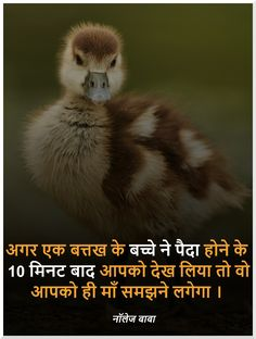 Interesting fact in Hindi - History Wow Facts, Real Facts, True Facts, Funny Facts, Weird Facts, Crazy Facts, Gernal Knowledge In Hindi, General Knowledge Facts, Knowledge Quotes