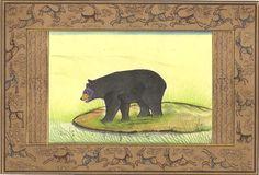 Indian Black Bear Mi