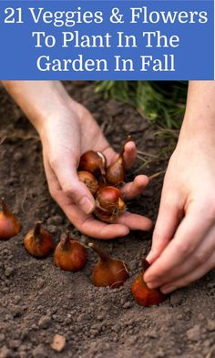 Autumn Garden, Easy Garden, Edible Garden, Summer Garden, Garden Tips, Garden Ideas, Vegetables Garden, Garden Plants, Indoor Plants