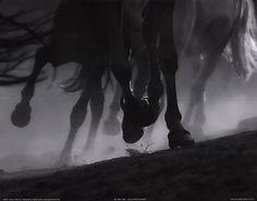 Galloping Horses  Fine-Art Print