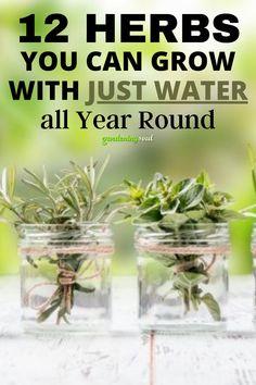Growing Herbs, Growing Vegetables, Growing Mint, Inside Plants, Home Vegetable Garden, Herbs Indoors, Healing Herbs, Plantation, Edible Garden