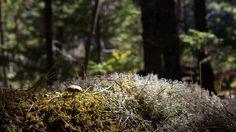 https://flic.kr/p/ps8ffi | Little Mushroom in the Forest
