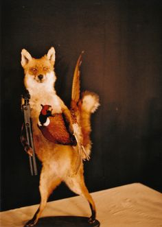 I am not sure why he needed the shotgun... but I still like it Taxidermy Monstrosity #fox #pheasant #rifle