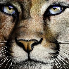 Mountain Lion Painting by Jurek Zamoyski - Mountain Lion Fine Art Prints and Posters for Sale The power of the Lion and the Love they emit makes me worship them. Big Cats Art, Cat Art, Beautiful Cats, Animals Beautiful, Animals And Pets, Cute Animals, Gato Grande, Lion Painting, Mountain Lion