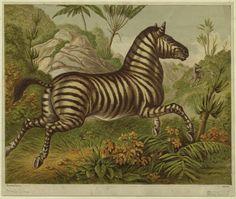 Zebra - a beautiful print