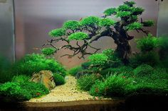 Love this aquascape -use of driftwood with multiple small branches make for a realistic looking moss tree
