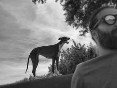 #oliviathegreyhound #rescuedgreyhound