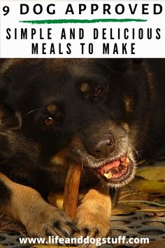9 Dog Approved Simple and Delicious Meals to Make. #dogs #funnydogs #doghumor Easy Delicious Recipes, Yummy Food, Funny Dogs, Funny Animals, Cute Dogs And Puppies, Dog Memes, Dog Accessories, Food To Make, Dog Lovers