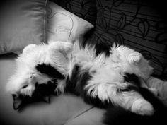 My cat....beautiful