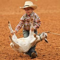 .First goats, then calves. Gotta start somewhere....