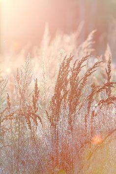 PEACH GRASS