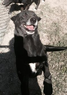 12/2016 9/20/15sl♥♥♥♥♥8/24/15 sl♥♥♥♥♥Absolutely Adorable♥♥♥ ♥♥♥♥♥♥Babycakes, a Petfinder adoptable Border Collie Dog | Albemarle, NC | Im currently attending the New Leash on Life Program. I should return 10/9/13. Check back to see...
