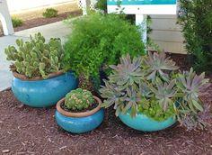 sedum planter - Google Search