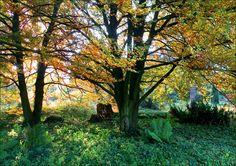 Waldstimmung am Morgen - Jahreszeiten - Galerie - Community