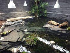 Fish Pond Gardens, Paludarium, Turtles, Animals, Aquariums, Terrariums, Reptiles, Tortoises, Animales