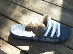 This squirrel is attached to my flip flop! Crazy squirrel!