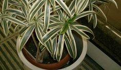 9 plantes d'intérieur dépolluantes, assainissantes mais faciles à vivre